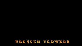 Stefans Pressed Flowers